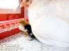 20_baby-chicks