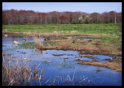 Mass Audubon Society Wlidlife Bird Sanctuary