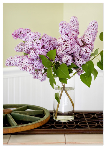lilacs displaye in home