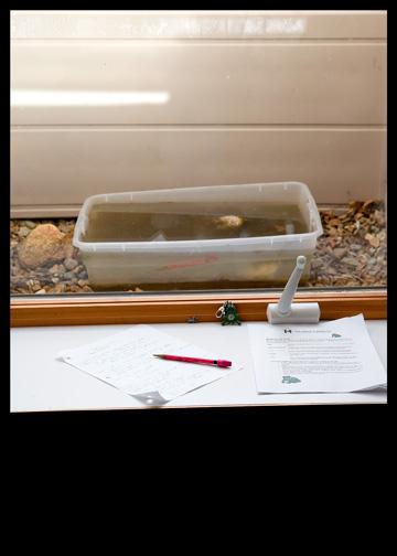 tadpoles-breeder-habitat