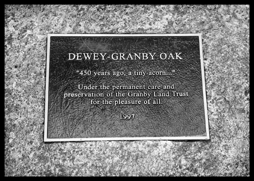 dewey granby oak