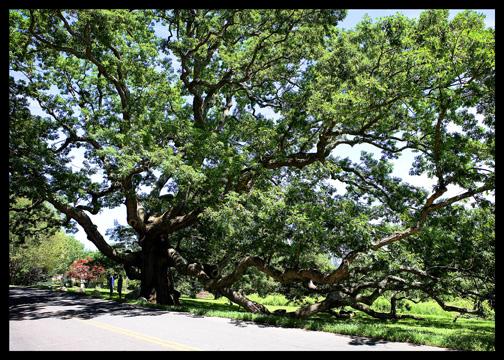 dewey-granby-oak