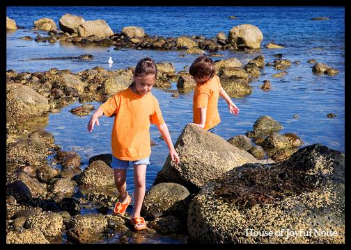 kids-on-shore-rocks