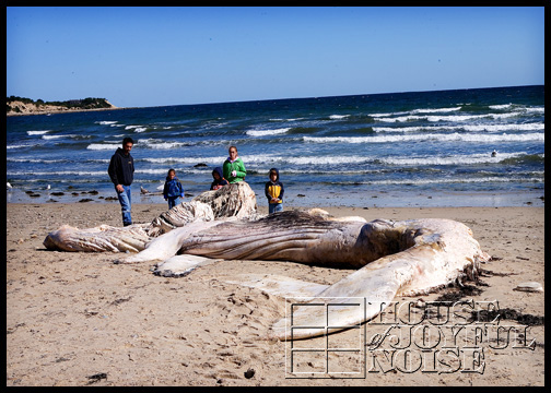 whale-carcass-washed-ashore_1