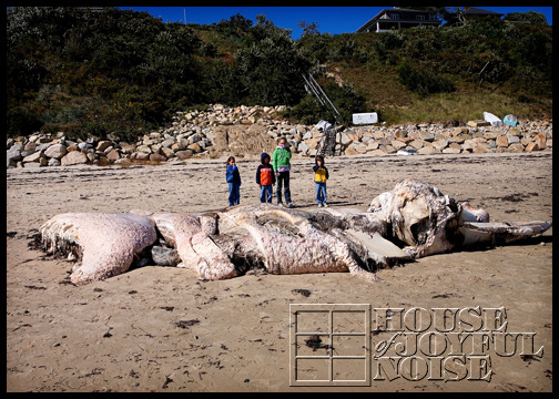 whale-carcass-washed-ashore_3
