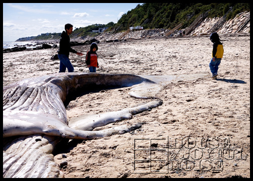 whale-carcass-washed-ashore_4