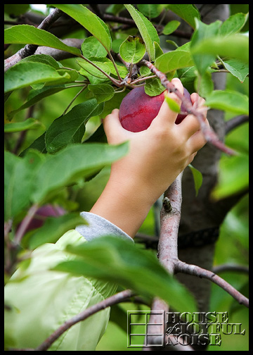 5_child-hand-picking-apple