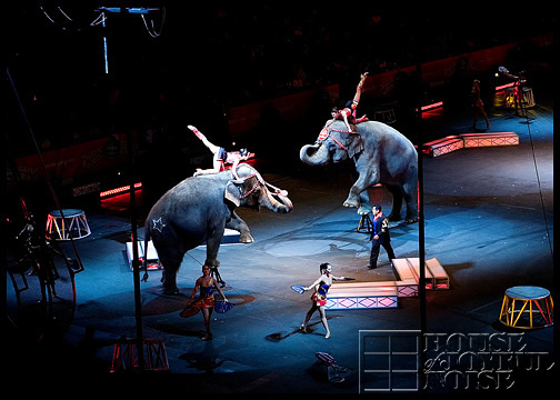 elephants-in-circus