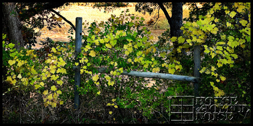 green-vines