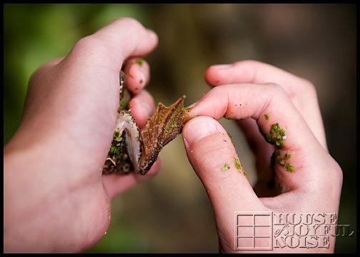 bullfrog-foot