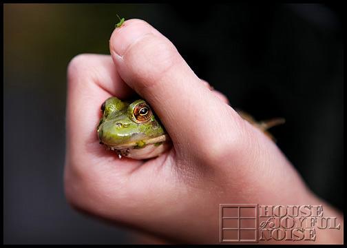bullfrog-in-hand