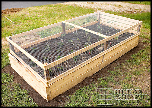 growing strawberries in a covered bed