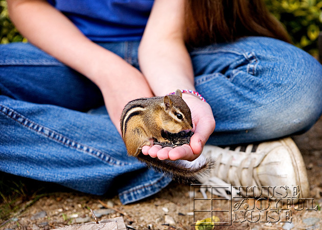 hand-taming-chipmunks-1