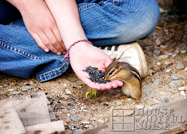 hand-taming-chipmunks
