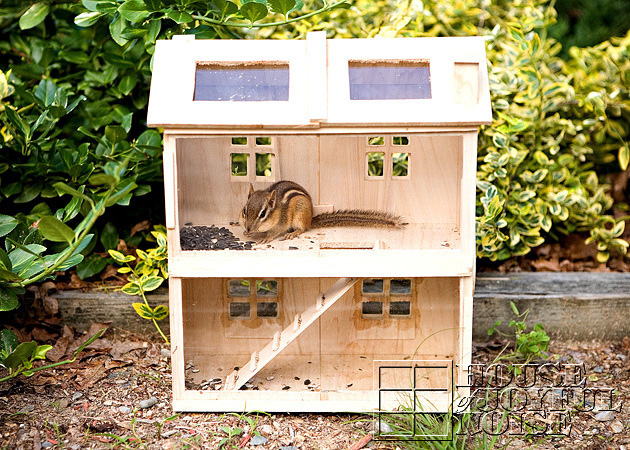 homemade-chipmunk-feeding-house-4