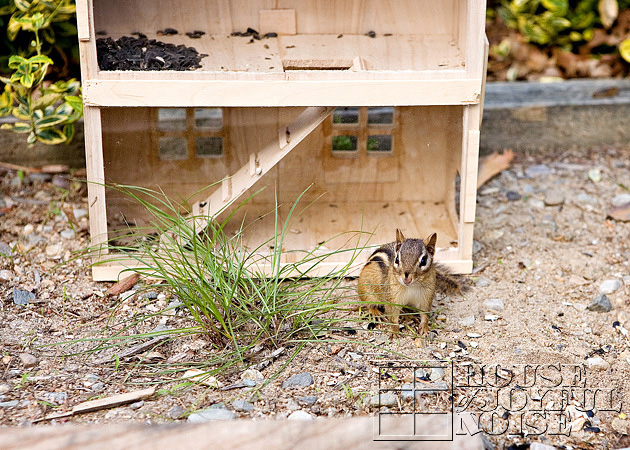 homemade-chipmunk-feeding-house