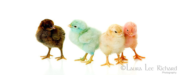 laura-lee-richard-photography-kids-and-colored-chicks-portraits-18