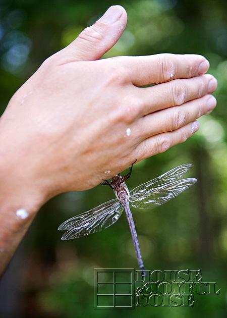 huge-dragonfly-3