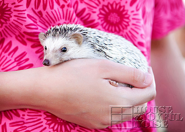 08_hedgehog