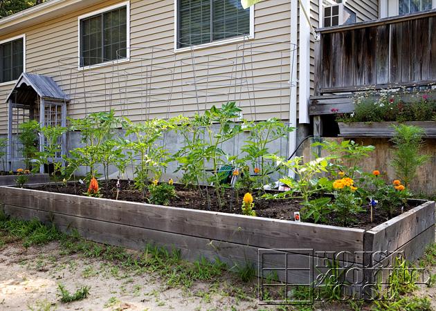 15_1st-garden-bed-grown
