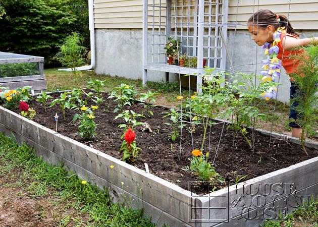 16_2nd-garden-bed-grown