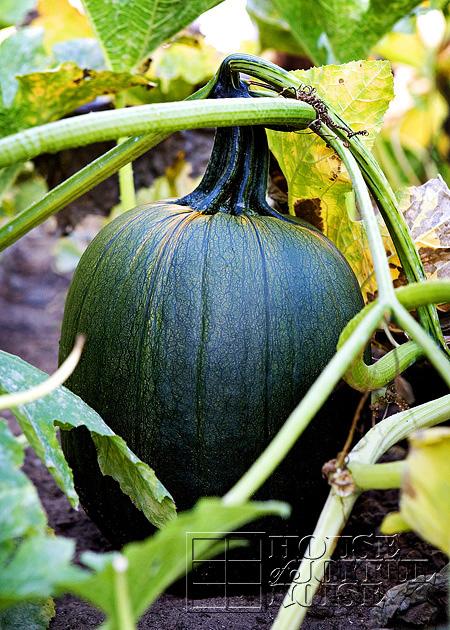 making-growing-pumpkin-patch-progress-results-16