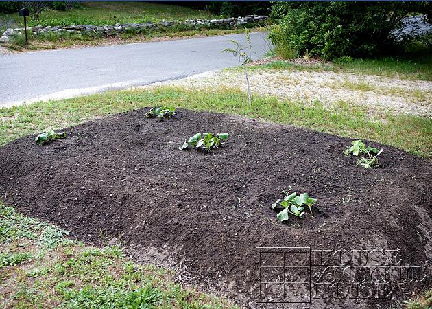 making-growing-pumpkin-patch-progress-results-8
