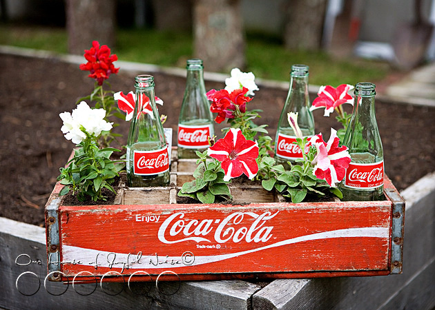 coke-bottles-crate-repurposing-creative-gardening-3