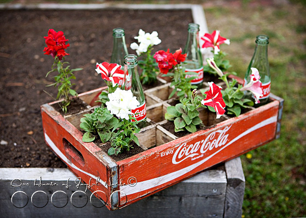 coke-bottles-crate-repurposing-creative-gardening-5