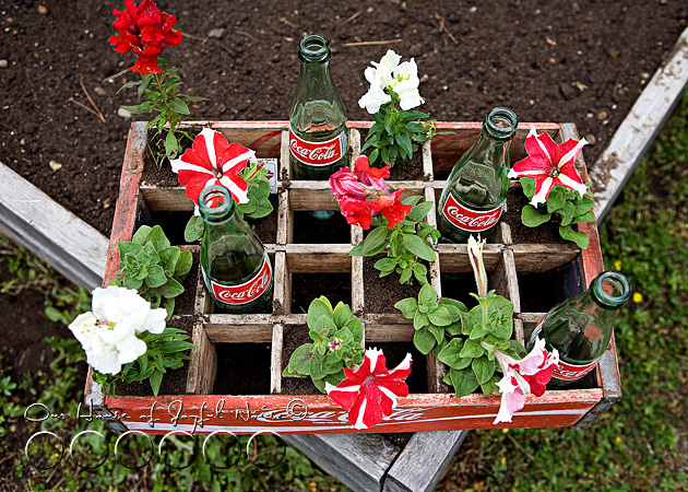 coke-bottles-crate-repurposing-creative-gardening-8