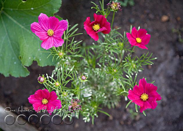 early-flower-vegetable-garden-photos-14
