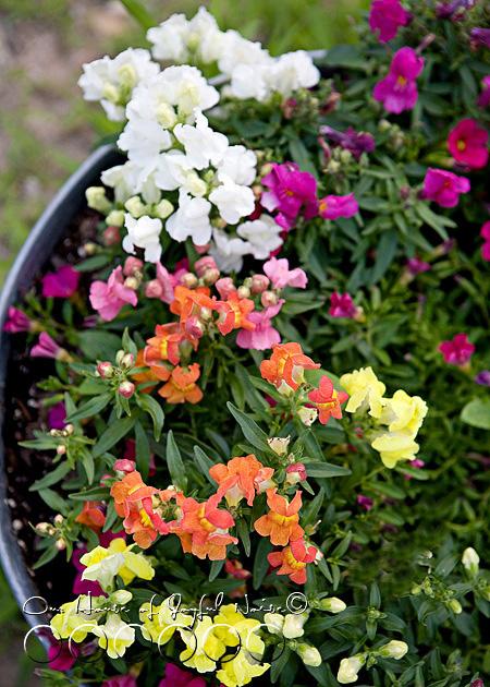 early-flower-vegetable-garden-photos-16