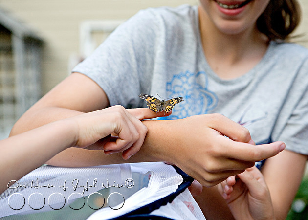 metamorphosis-butterflies-study-homeschoolig-19