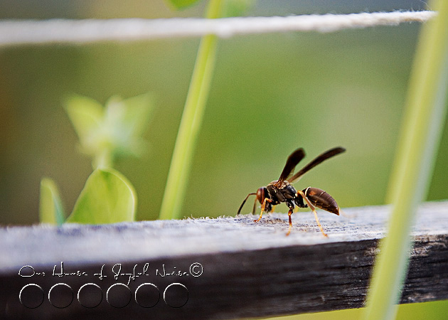 018_hornet-on-wood1