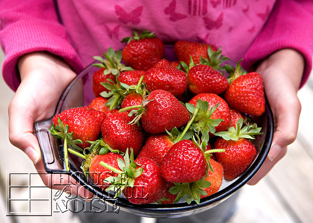 lessons-learned-growing-strawberries-3