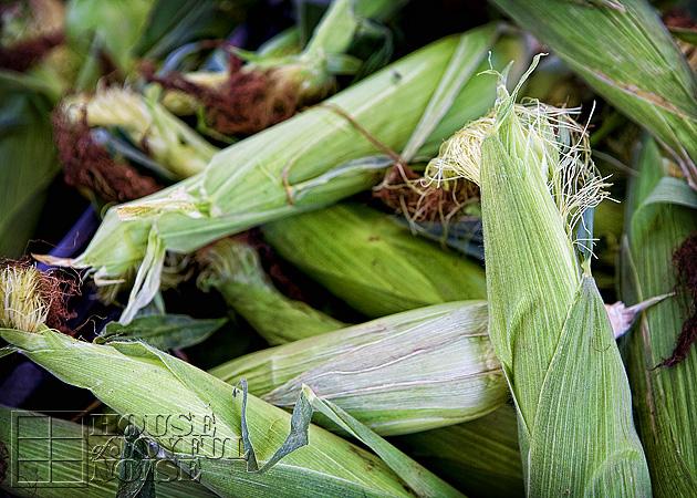 008_unhusked-corn-cobs