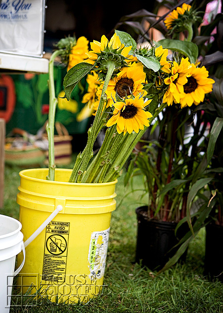 010_sunflowers-in-bucket