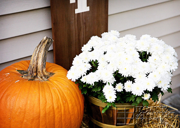 close up of white mums and orange pumpkin