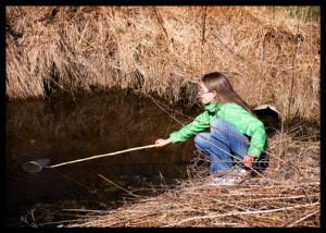 bullfrog-tadpole-hunting (2)