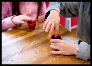 little hands potting plants