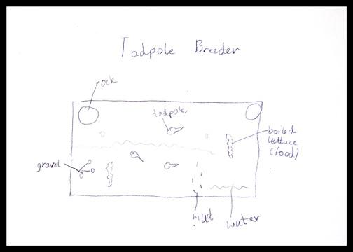 tadpole breeder plan