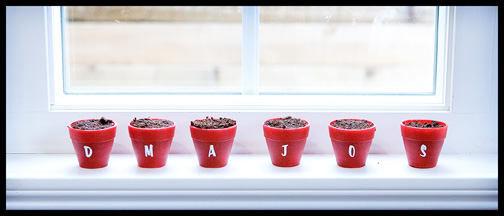 tiny potted plants