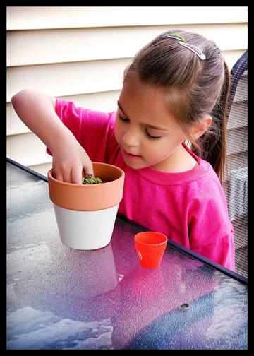 child re-potting plant