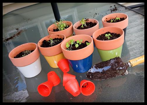 re-potting-little-plants