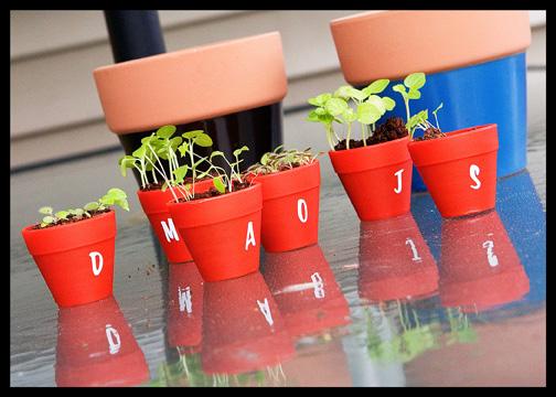 tiny-potted-plants