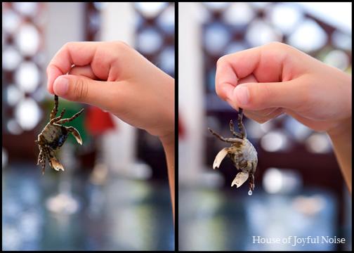 close up of baby crab
