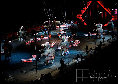 elephants-in-circus-2