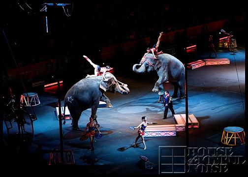 elephants-in-circus