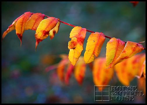 fall-foliage-fire-colors