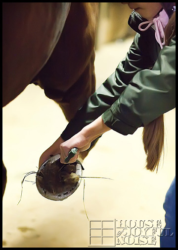 4_cleaning-horseshoes